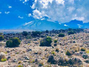 Kilimanjaro, Tim Watts July 2019